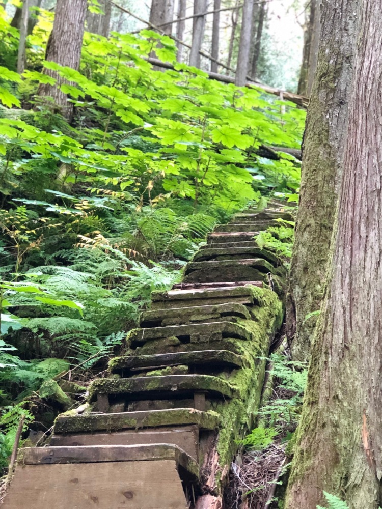 Forest Steps 4